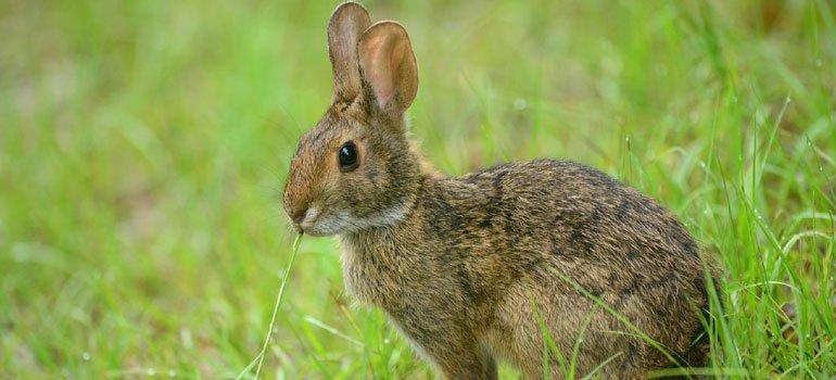 ahuyentador y repelente de conejos y liebres