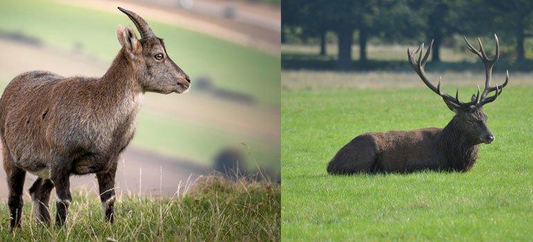 barrera-de-olor-para-ciervos,-corzos,-gamos-y-cabra-montes-cervirep_SEPRA